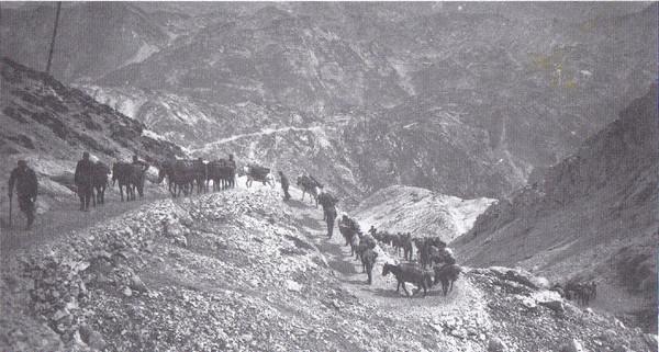 קו אספקה אוסטרו-הונגרי. האיטלקים השתמשו בעיקר בפרדות. האוסטרו-הונגרים השתמשו גם בסוסי הרים מבוסניה